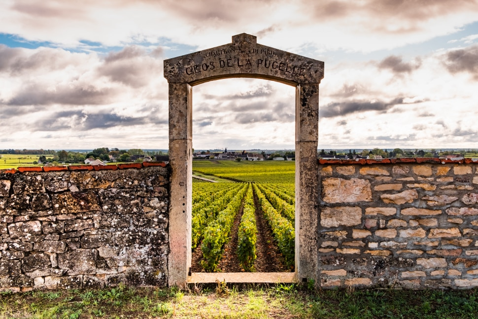 Bourgogne Clos de la Pucelle grand cru vineyard, old fence with arch in the morning.