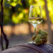 The Difference Between Oaked and Unoaked Chardonnay Taste