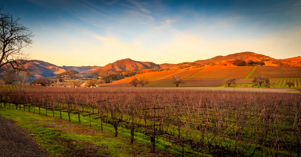 More than 16,000 acres of Chardonnay grapes are planted annually in Sonoma County.